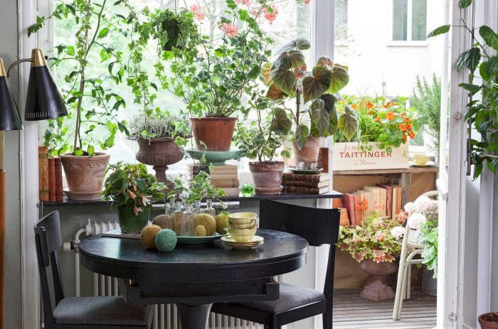 Stadsodlarens fönster är prunkande med allsköns växter. Gröna, blommande, ätbara växter och rariteter om vartannat. Foto: Blomsterfrämjandet/Anna Skoog