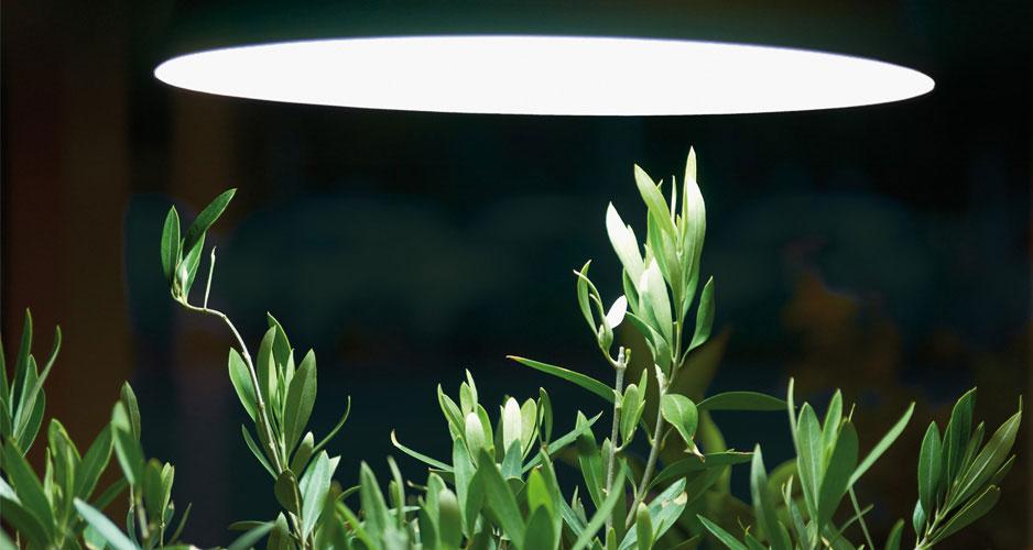 Växtbelysning kan användas till mycket: Användningsområden: 1. Övervintringslampa till medelhavsväxter, t ex oliv- och citrusträd. 2. Allmän belysning till krukväxter i mörka inomhusmiljöer. 3. Belysning vid förodling tidigt på året. - See more at: http://www.nelsongarden.se/swe/sek/p/vaxtbelysning-_240/vaxtbelysning-armatur-vit_5605#sthash.AiW6G2Wk.dpuf