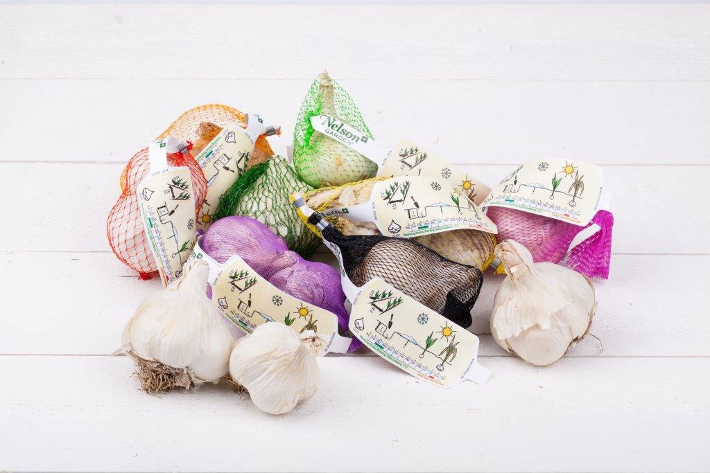 Använd vitlöksutsäde från trädgårdsbutik när du ska odla egen vitlök