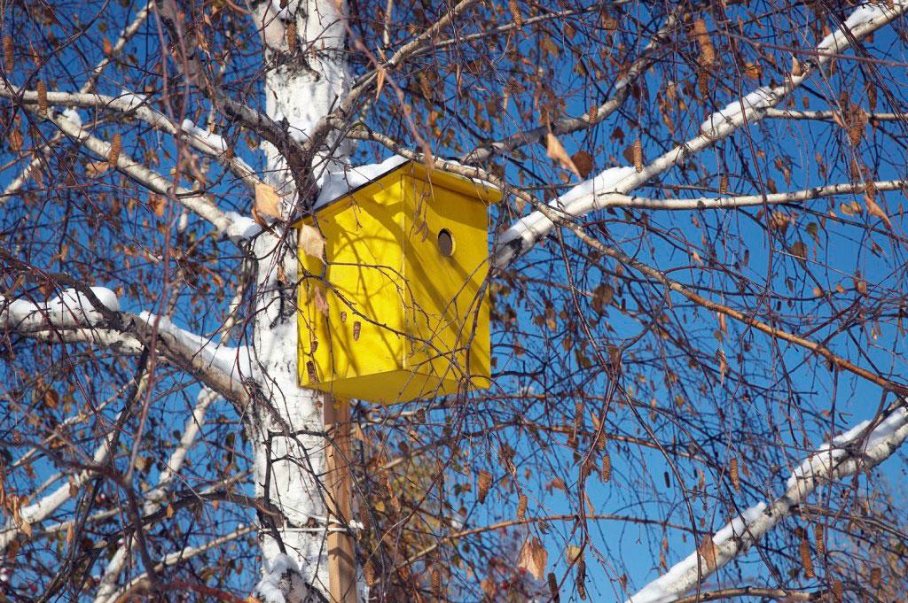 Inte sällan lider fåglarna av bostadsbrist. Sätt gärna upp fågelholkar i din trädgård.