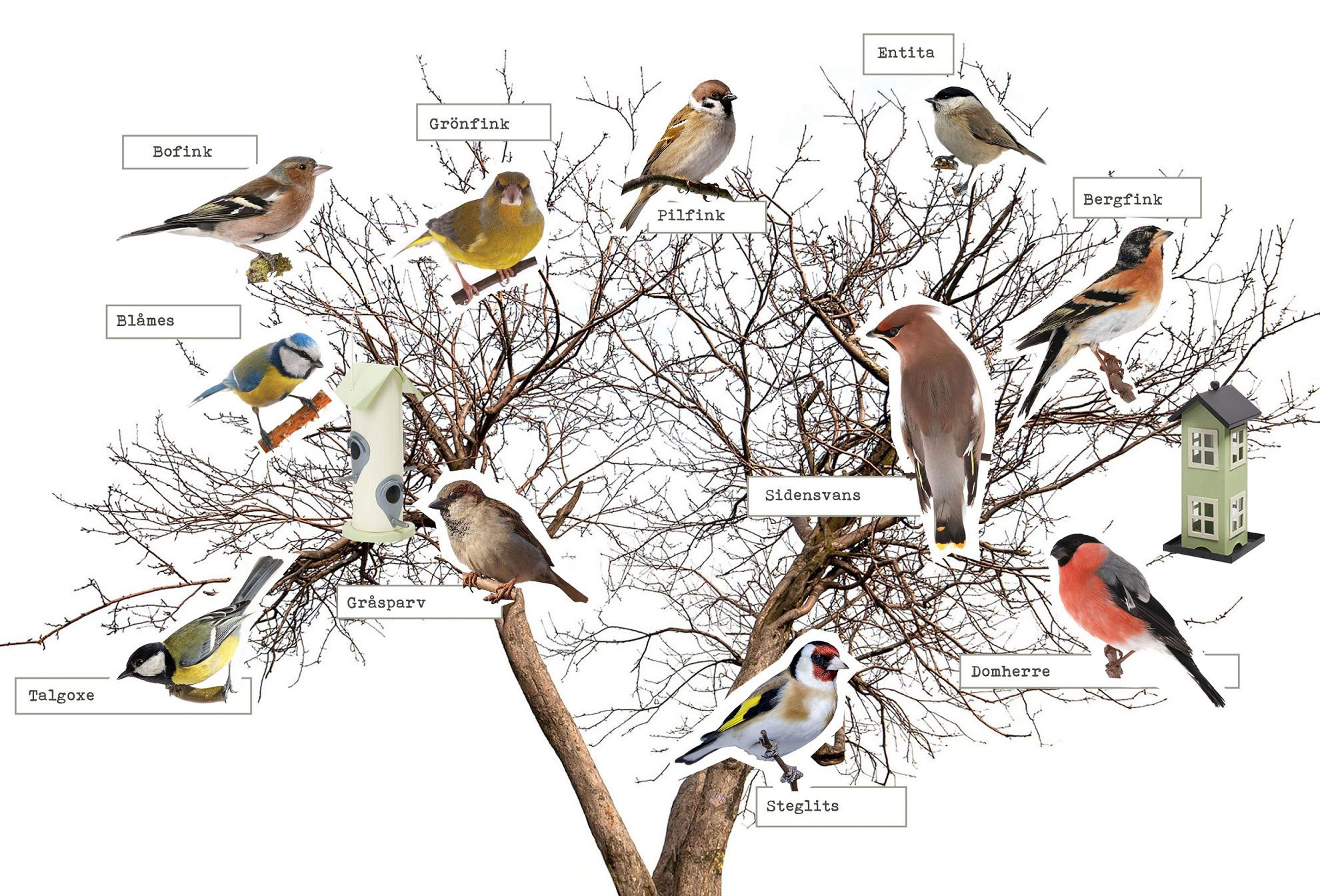 Vilken fågelmat passar vilken fågel?