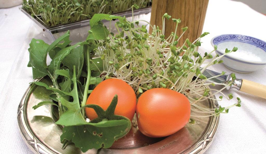 Färska hemodlade groddar. En fräsch grönsak du kan odla själv hela året.