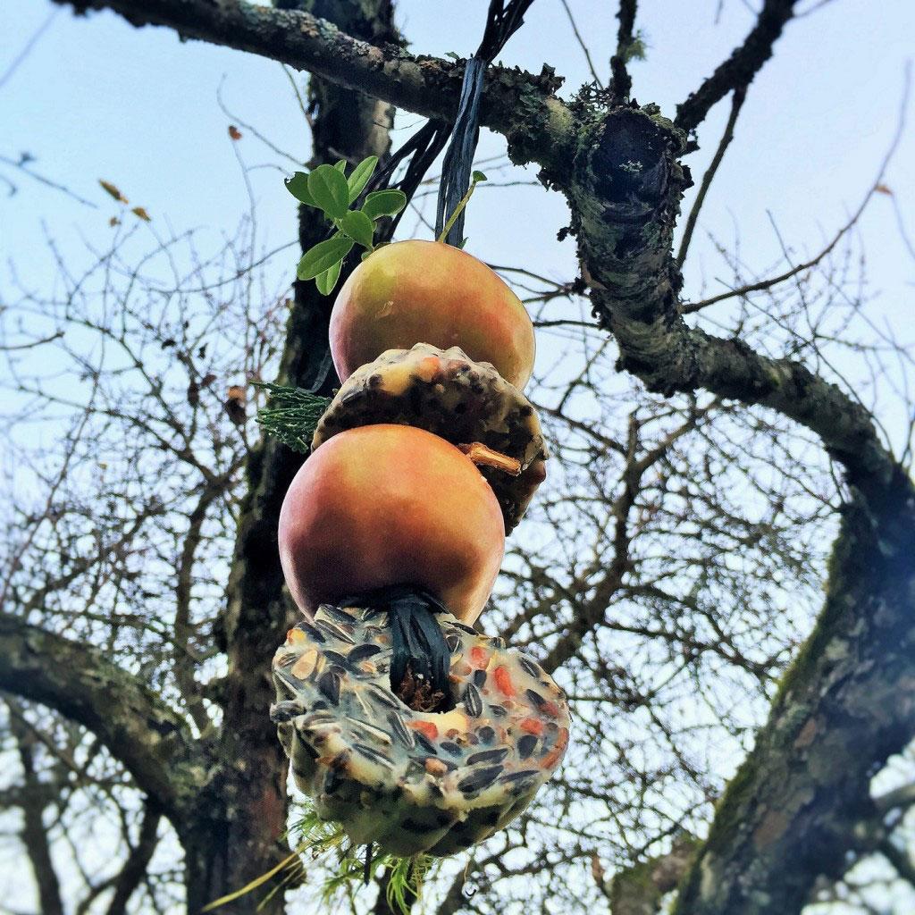 Hemmagjord fågelmat är dekorativ och nyttig för småfåglarna