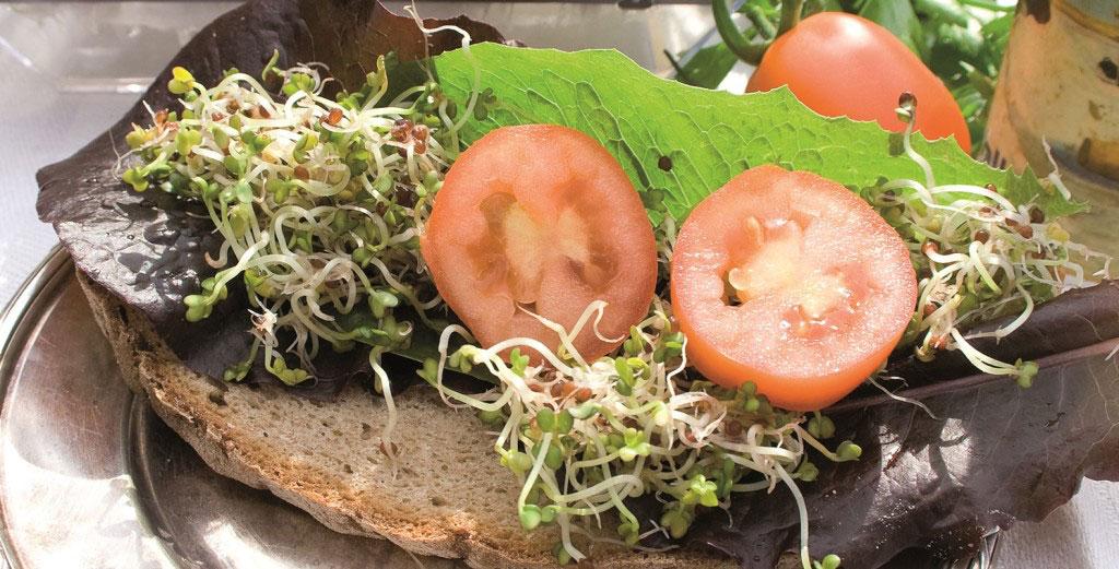 Färska groddar på mackan piggar upp en grå höstdag och är en bra vitaminkick mitt i smällkalla vintern.
