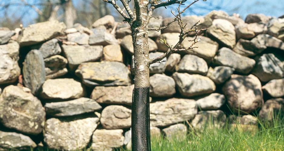 December i Trädgården. Glöm inte att skydda unga träd med gnagskydd.