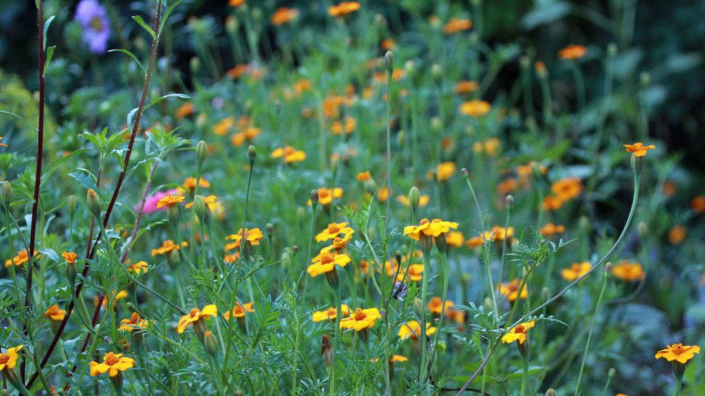 Gröngödsla trädgården då tillför du näring och mineraler.