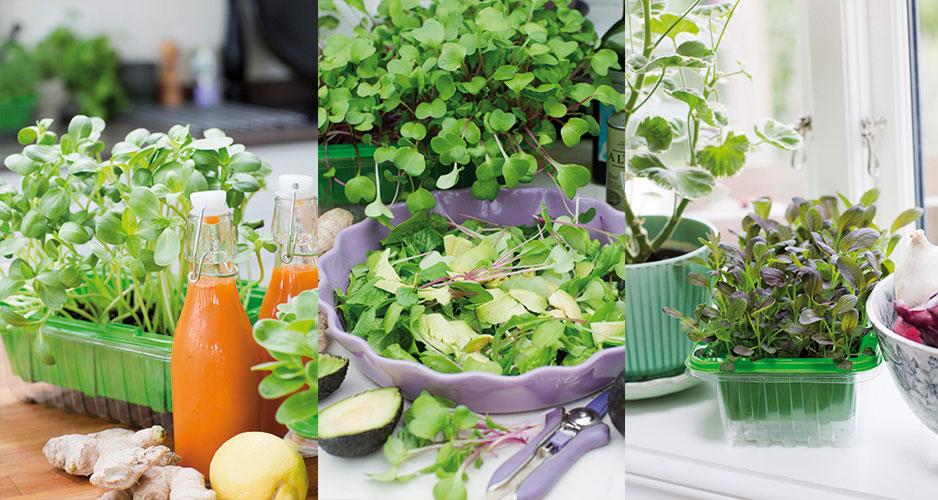 Micro Leaf - Julklappen för den som vill odla lite av sin egen mat året om.