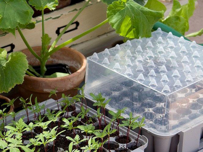 Många plantor på minimal yta – pluggboxen är ett utmärkt minidrivhus för de där små fröerna vars plantor du vill ha många av! Foto: Annika Christensen