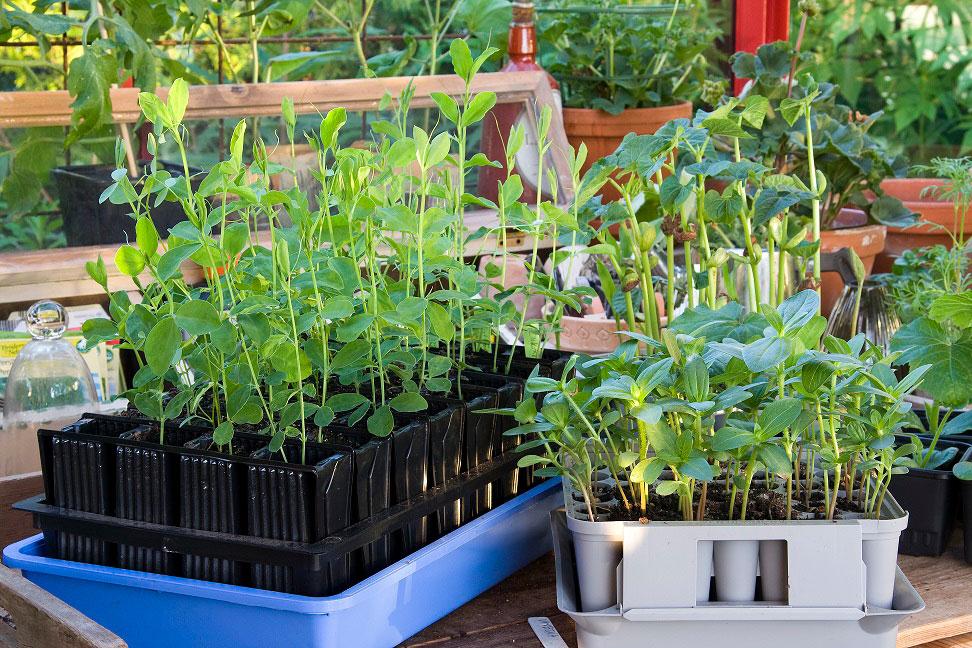 Förodla för starkare plantor