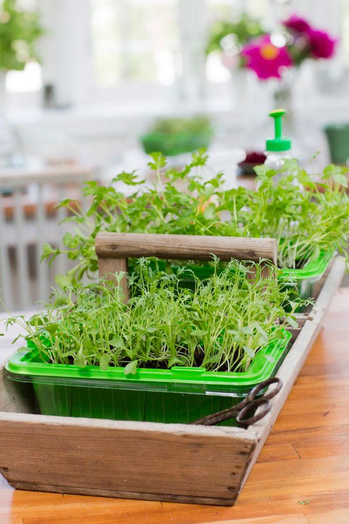 Ställ Micro leaf boxarna i en fin låda.