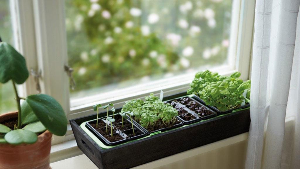 Förodla - minidrivhus för fönster
