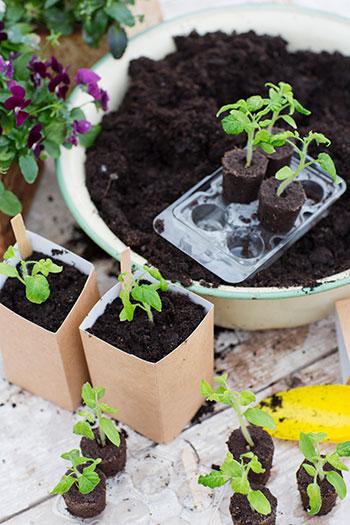 Med Easy to Grow är det enkelt att så dina egna grönsaker från frö. Foto: Annika Christensen