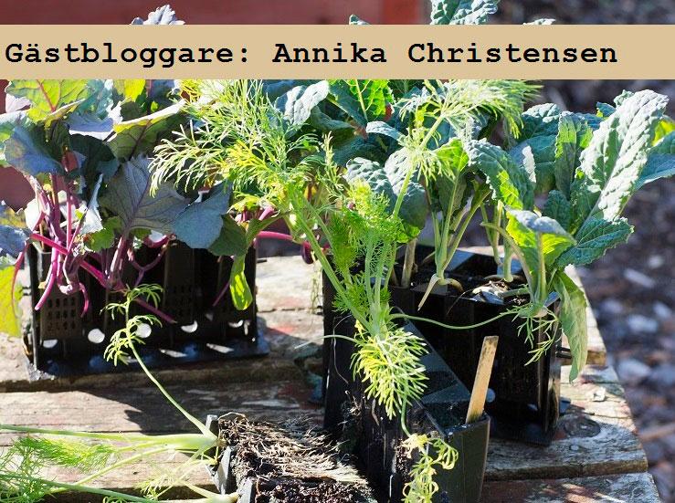 Odla grönsaker med Rootmaster