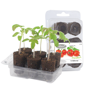 Easy to Grow tomato pot
