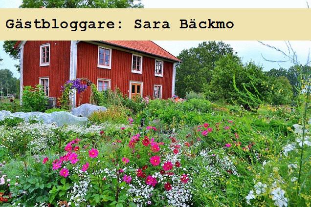 Sara Bäckmo: Kom igång med köksträdgården
