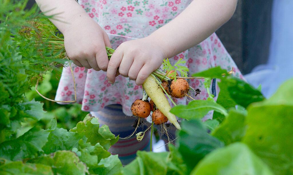 Odla med barn – tips från Nelson Garden Foto: Anna Lindeqvist