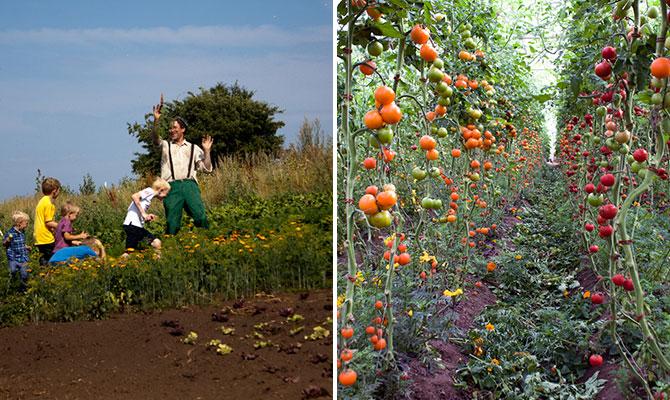 mandelmanns-trädgårdar
