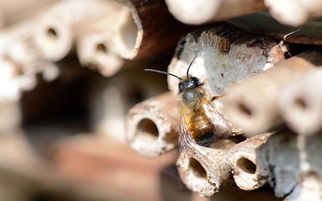 Humor och bin - ge dem plats i din trädgård