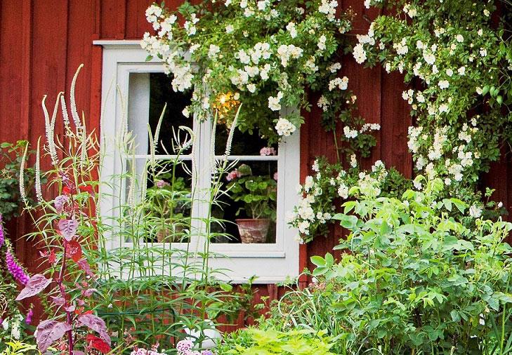 Årets trädgård 2016 - ett blomstrande fönster i Småland.