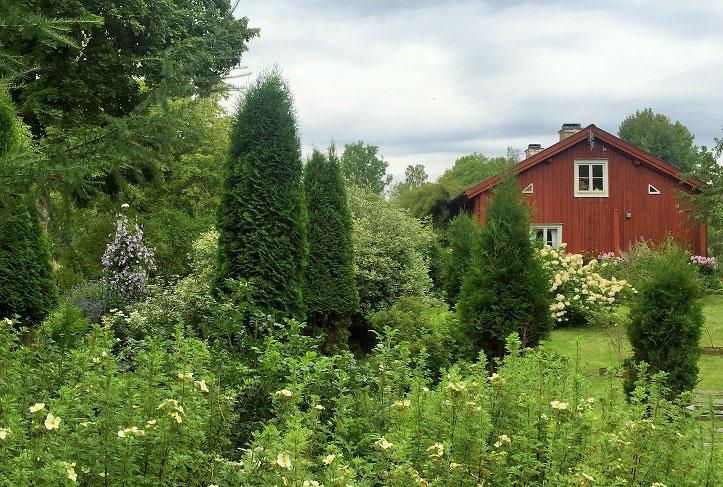 Årets trädgård 2016. Frodig och grönt i trädgården på Kuppramåla.