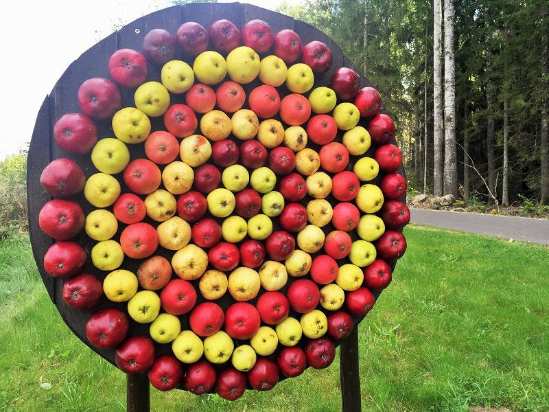 Måltavla av äpplen på rastplats i Småland