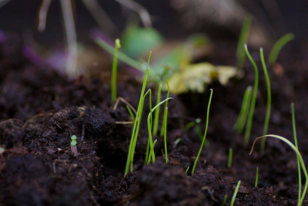 Höst- och vintern är tiden att så. Vissa fröer bör sås lite tidigare, så de hinner gro innan vintern, medan andra ska ligga i träda och gro först frampå våren. Sprid gärna ut din sådd och spara några fröer till våren, ifall de inte tar sig.