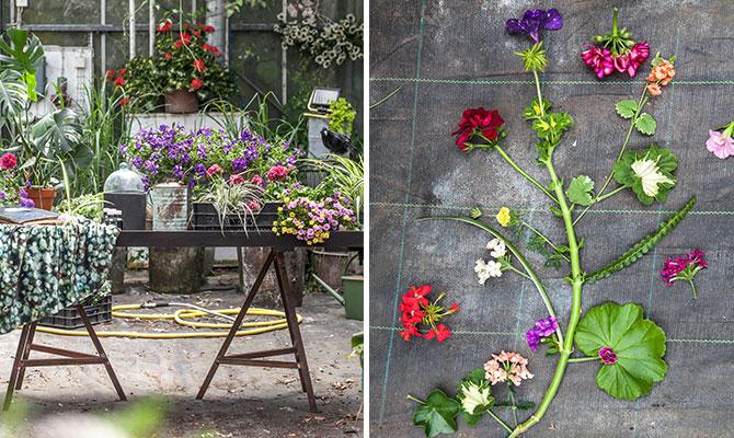 Trädgårdstrender 2017 Gröna Labbet