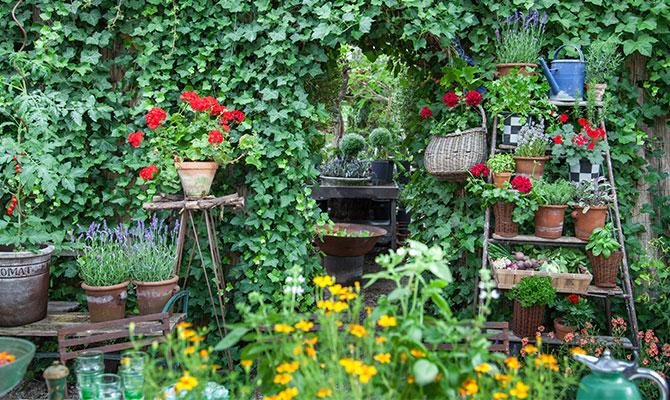 vego-garden