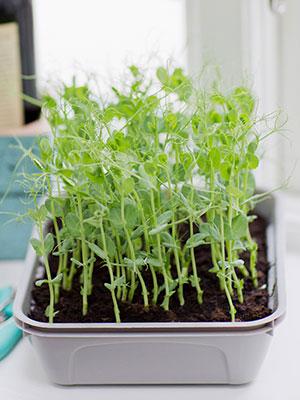 växtbelysning och inomhusodling