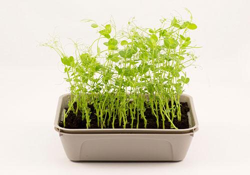 Odla Micro Leaf