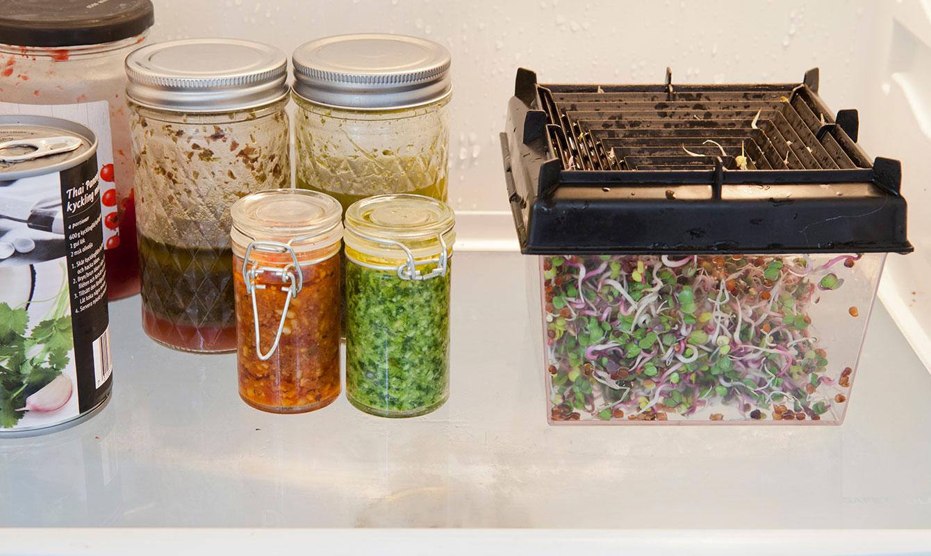 Groddar i kylskåp