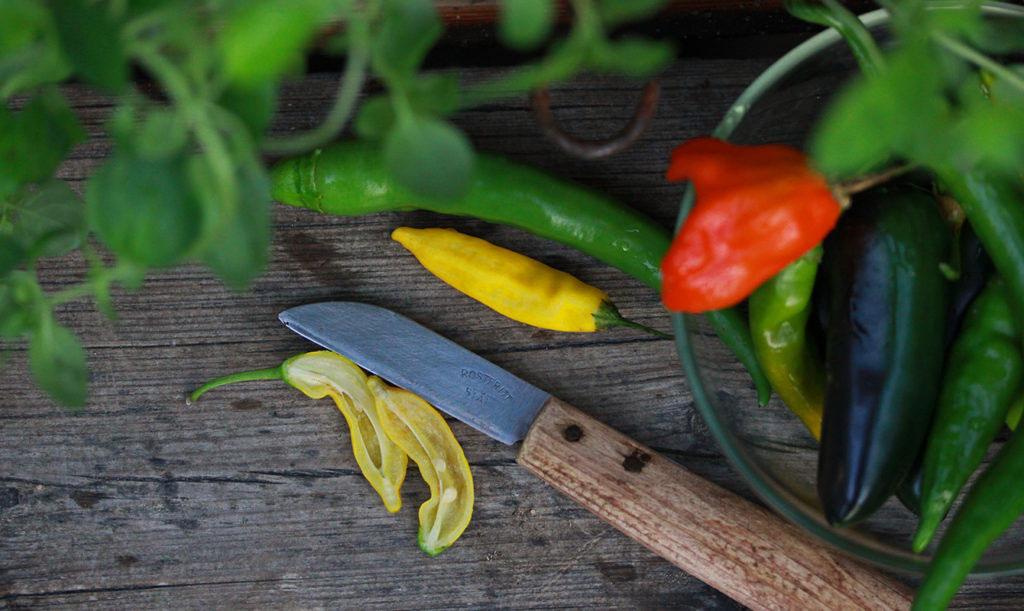 Skörda egen chili