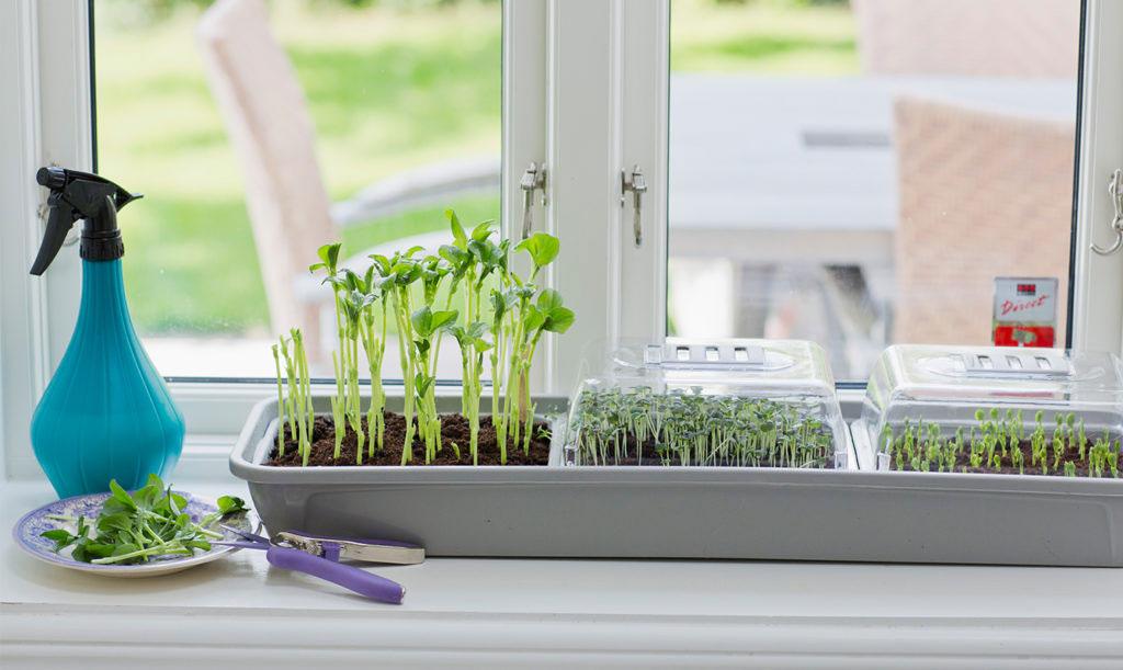 Odla mikroblad i omgångar och skörda lite hela tiden