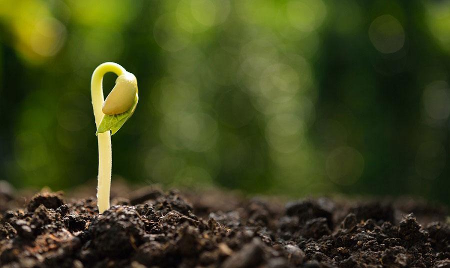 Ekologiska fröer ger en friskare jord