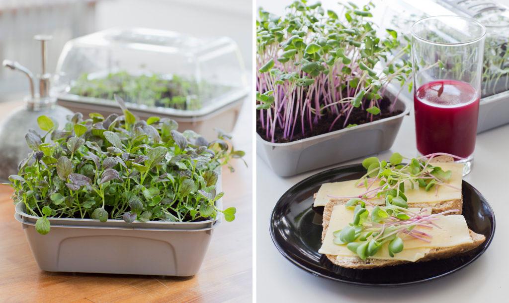5 fördelar att odla mikroblad