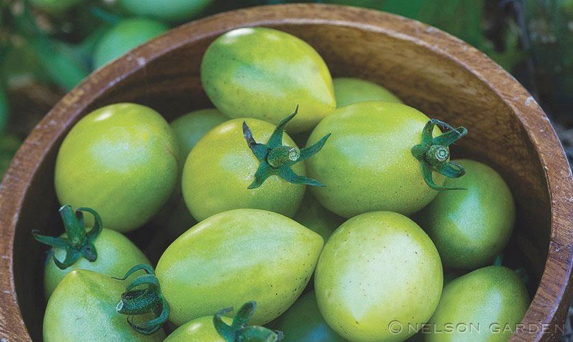 Gröna körsbärstomater av sorten Envy Green från Nelson Garden.