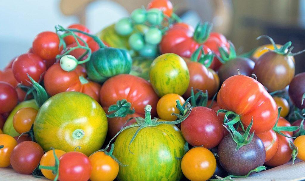 Tomater av olika sorter - vilka är godast?
