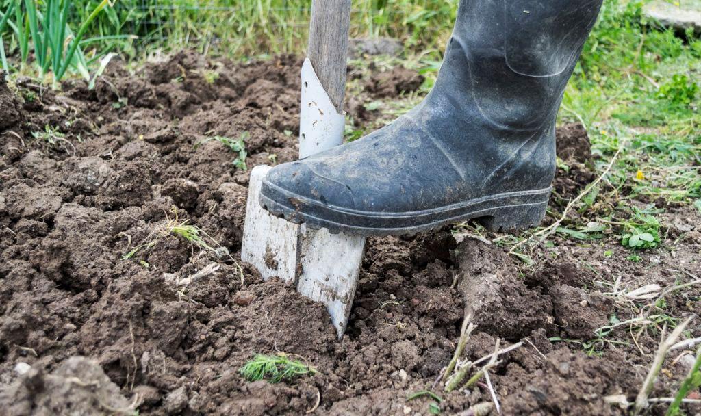 Sandig eller lerig jord - så tar du reda på vad du har i din trädgård.