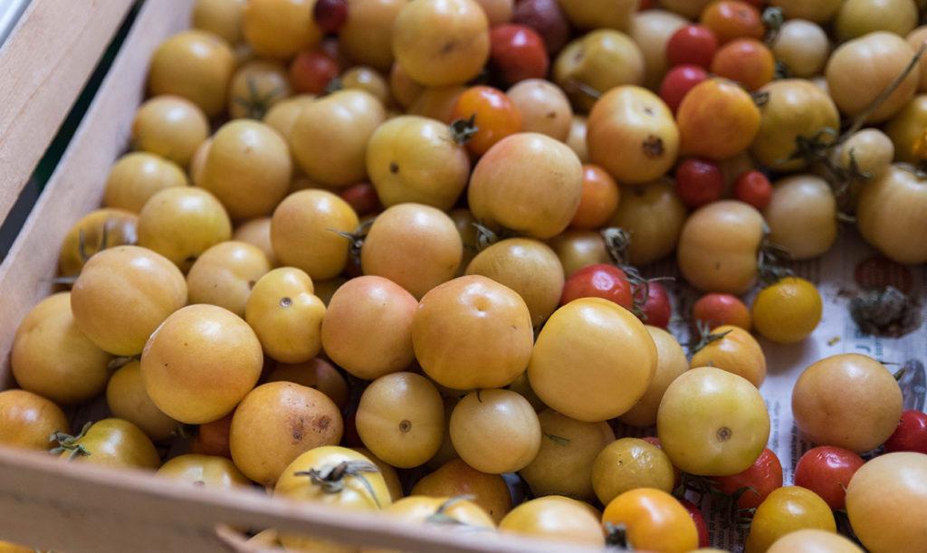 Farbror Grön tycker om den gula tomaten Ponderosa