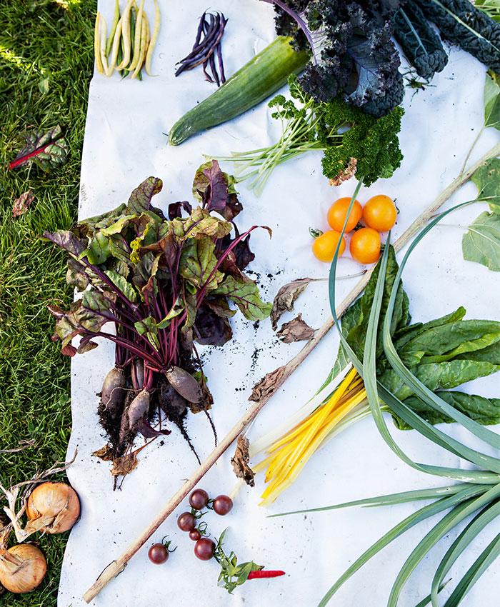 skolbarn får komma och se på trädgårdens odlingar