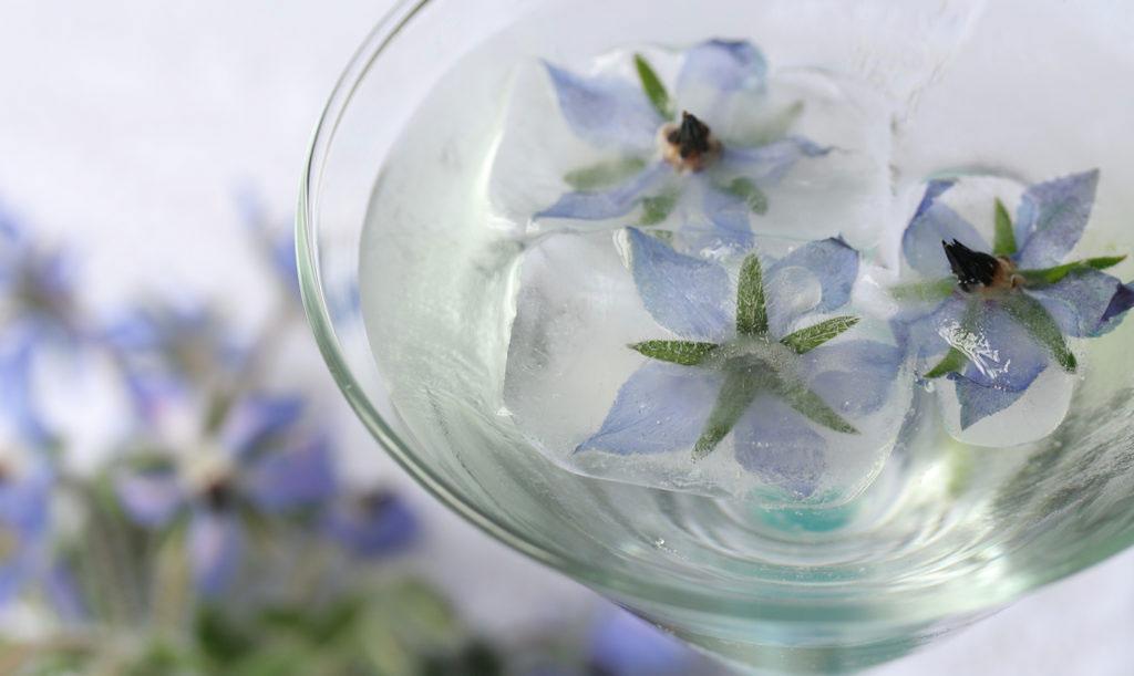 Ätbara blommor: Gurkört i en somrig drink