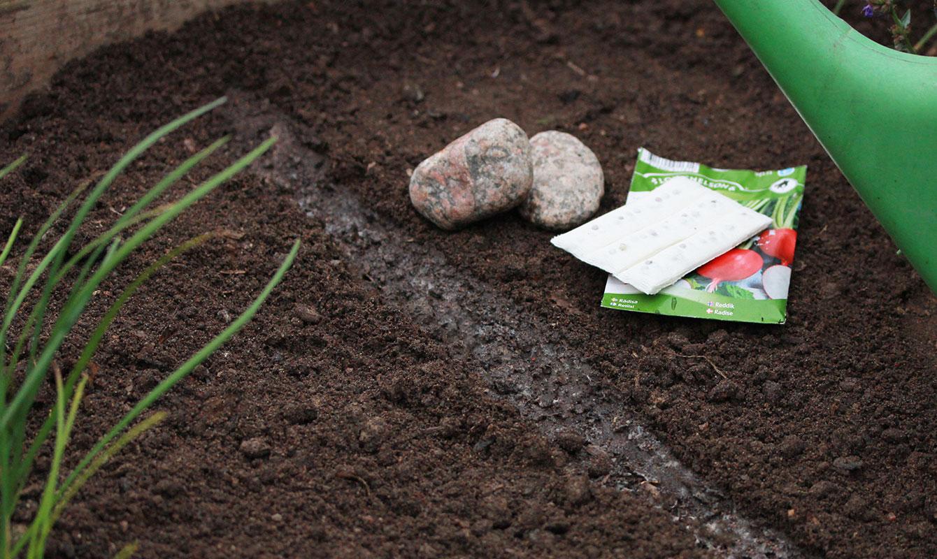 Såband för raka odlingsrader