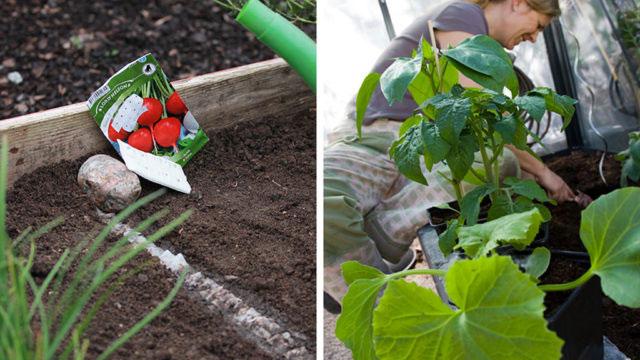 Att göra i hem och trädgård i juni.