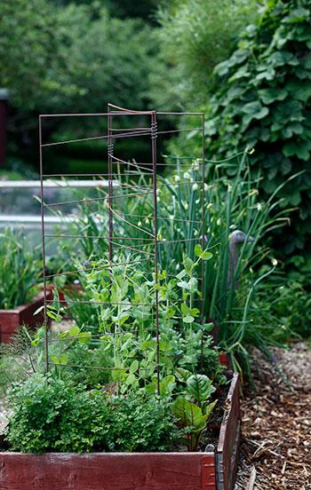 Blanda växter vilt och odla på höjden i dina pallkragar.