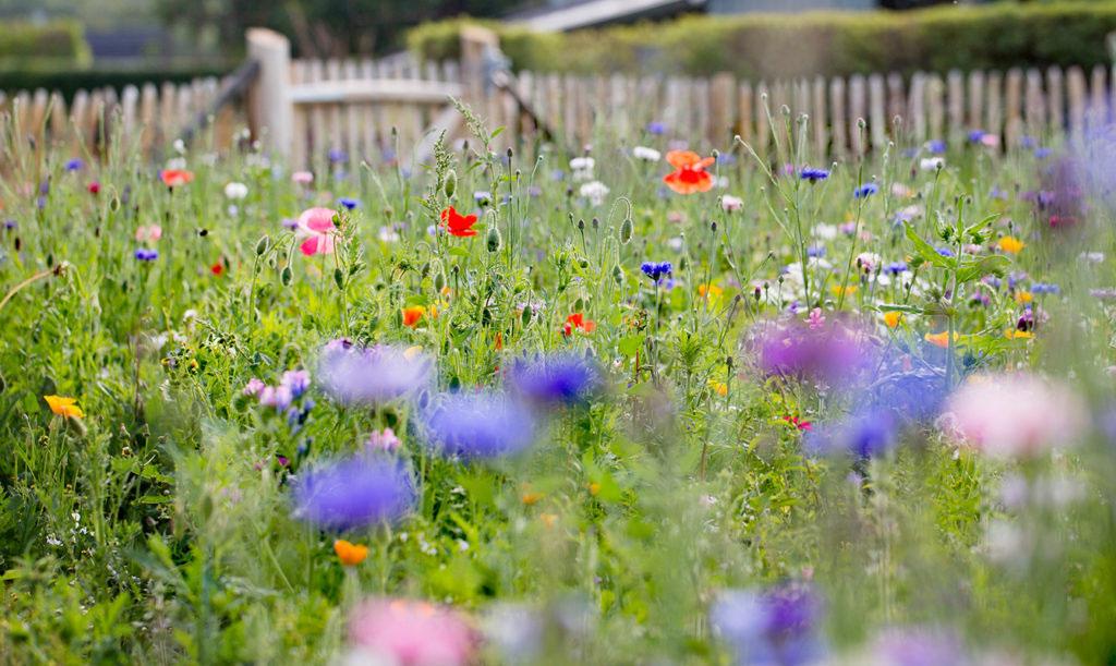 Blomsteräng på Rosendals trädgård