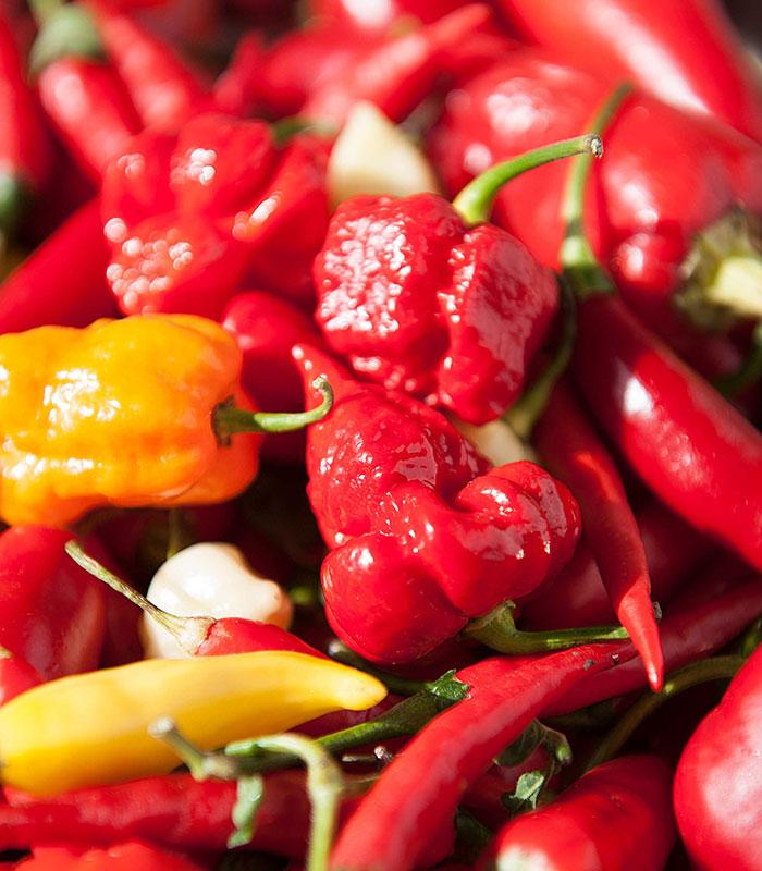 Nyskördad chili