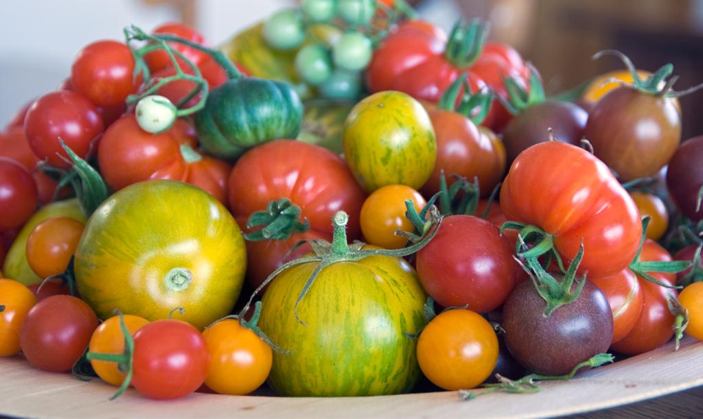 Förvara dina tomater i rumstemperatur