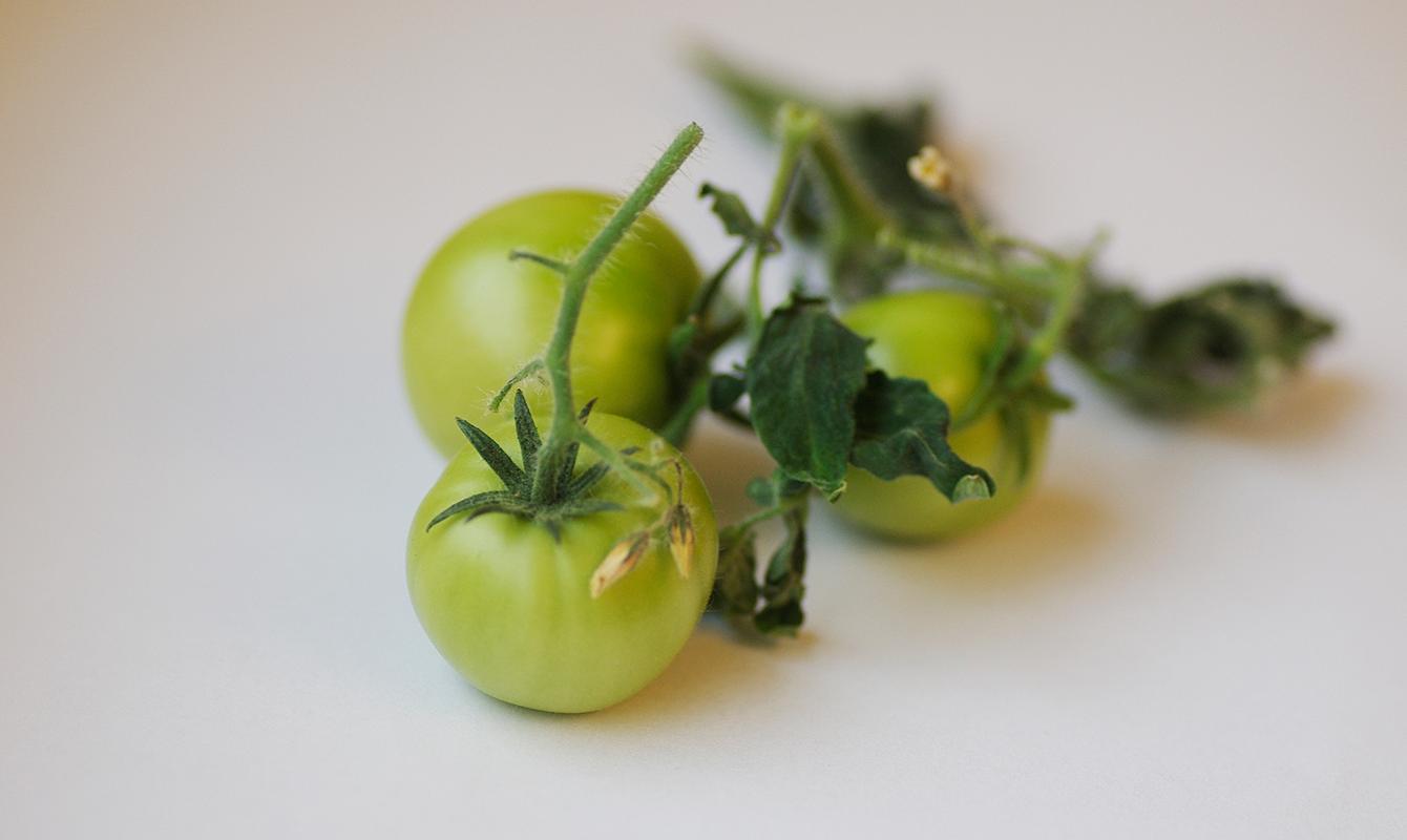 Förvara dina tomater