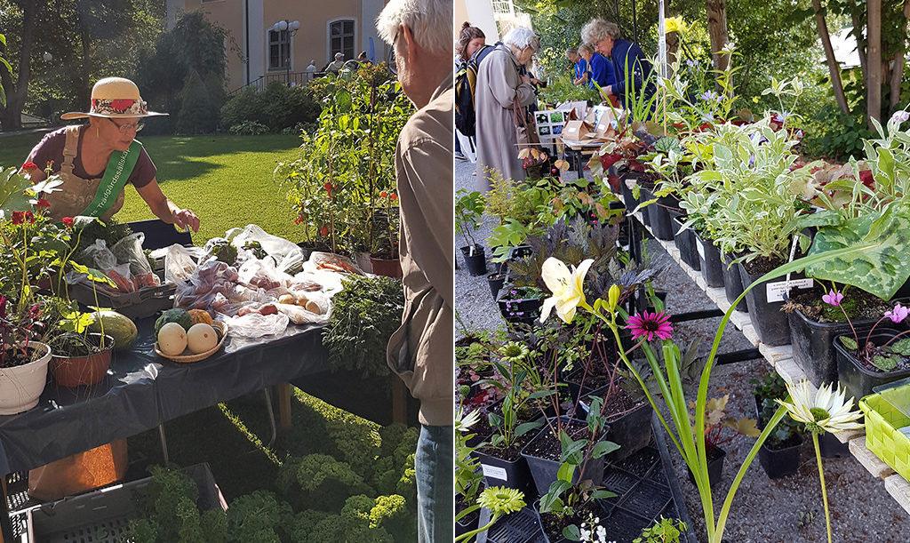 På trädgårdsmarknaden kan du bland anana köpa närodlade grönsaker, sommarblommor och perenner