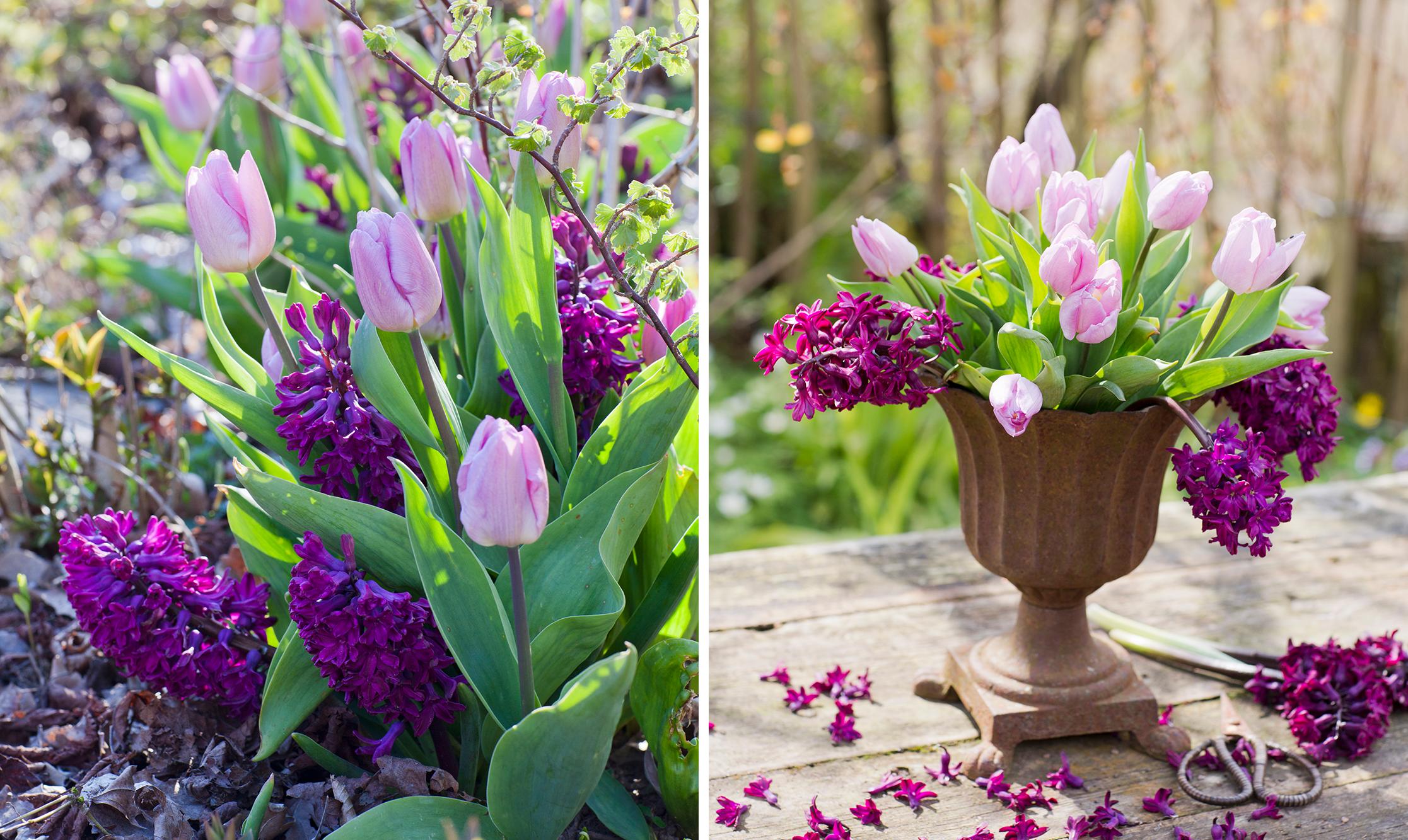 Vacker bukett med tulpaner och hyacinter